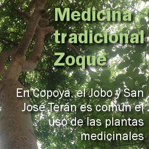 trazos_plantas_medicinales