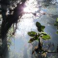 Bosques de Niebla de Chiapas, ahora amenazados por la industria minera, captan la lluvia que nutre a la región. Foto: Ángeles Mariscal/Chiapas PARALELO