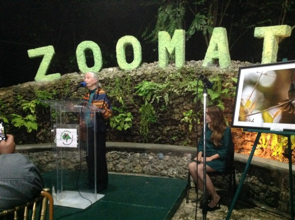 Jane Goodall, es una  naturalista, activista y primatóloga inglesa que ha dedicado su vida al estudio del comportamiento de los chimpancés en África y a educar y promover estilos de vida más sostenibles en todo el planeta. Foto: Isaín Mandujano/Chiapas PARALELO