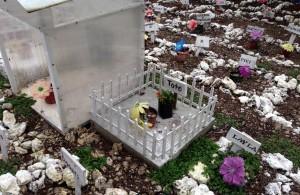 No sólo hay perros y gatos en el panteón de mascotas, también han sido enterrados conejos y hasta un borrego. Foto: Isaín Mandujano/Chiapas PARALELO