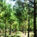 Bosques de Puebla afectados por gasoducto. Foto: Radio Expresión