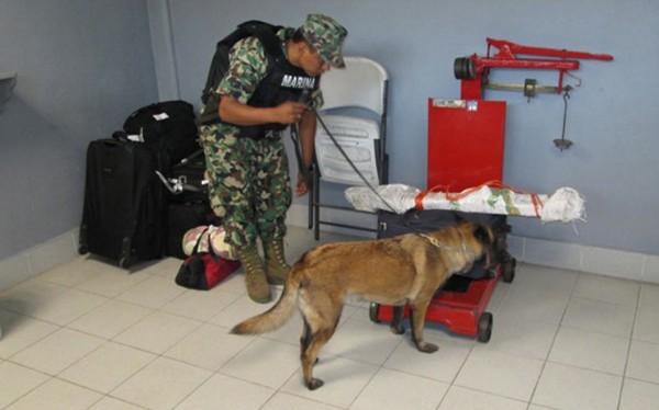 Policías y militares realizaron búsquedas en terminales de autotransporte en SCLC. Foto: PGJE