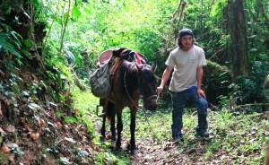 El arriero de la Reserva de la Biósfera El Triunfo. Foto: Isaín Mandujano