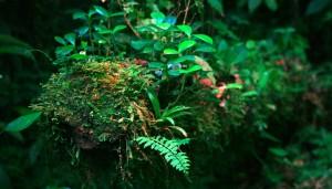 Un viejo tronco seco cubierto de otra vida en miniatura.  Reserva de la Biósfera El Triunfo. Foto: Isaín Mandujano