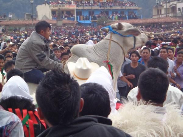 Toros en Carnaval de San Juan Chamula. Foto: Manuel Ghomez
