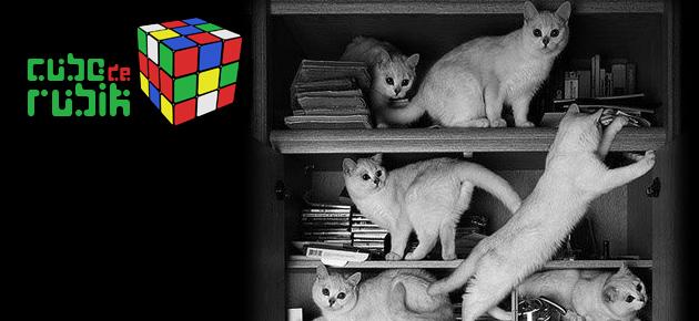 gatos_Port1