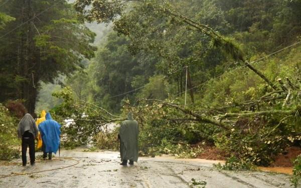 Deslizamiento de terrenos arrastra cableado electrico en Zinacantán: Foto: Amalia Avendaño