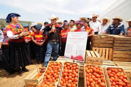 Ex gobernador Sabines durante la inaguración de un invernadero de tomate en Amatenango del Valle. Foto: Icoso