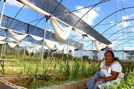 Invernadero en Yucatán