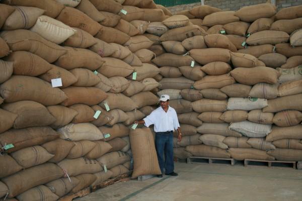 La mayor parte del café se destina en este momento a la venta en el mercado internacional. Foto: Ángeles Mariscal/Chiapas PARALELO