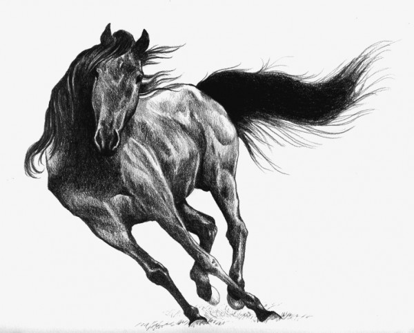 Caballo negro, de Mónica Alejandra Robles Corzo.