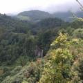 De 20 a 25 árboles son talados cada día. Foto: Radio Expresión