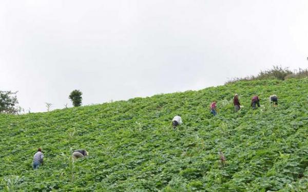El consejo, que defiende los bienes naturales de la Montaña y Costa Chica de Guerrero en contra de la minería. Foto: Radio Expresión