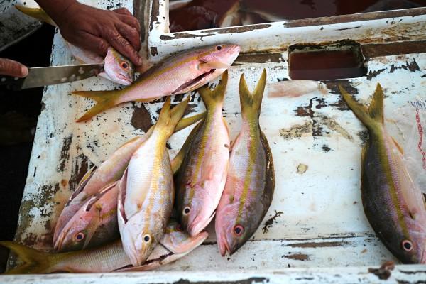 Peces pescados. Foto: Elizabeth Ruiz