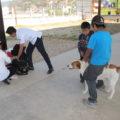 Perros en San Cristóbal de las Casas, durante campaña de vacunación contra la rabia. Foto: Emiliano Hernández
