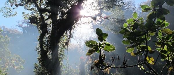 Había tenido uno de los más bellos regalos, entre luces y susurros, la naturaleza le había recordado la importancia de darse un espacio para convivir con ella