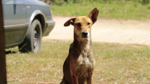 El Orejas, el perro que merodea en Laguna Encantada.  Fotografía: Ángel Rodrigo Martínez Fernández