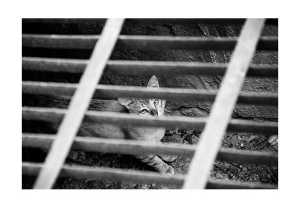 Gato encerrado. Foto: Jacob García