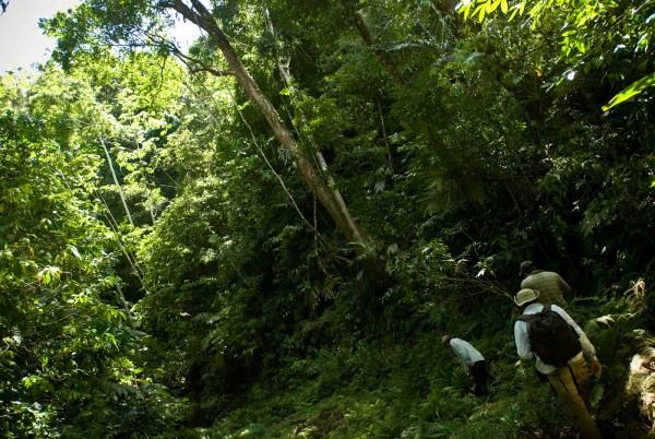 Chimalapas. Foto: Cortesía