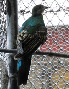 Quetzal en el ZooMAT