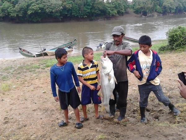 Mortandad de peces en el Usumacinta