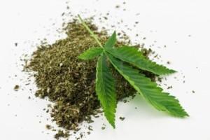 marihuana-seca-y-hojas-verdes