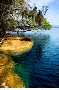 En 1979 la UNESCO la incluyó en la Red Mundial de Reservas de la Biosfera del Programa El Hombre y la Biosfera. Foto: Conanp
