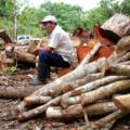 Imagen: Consejo civil mexicano para la silvicultura sostenible