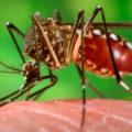 Bioinsecticidas, la alternativa para el combate contra el Dengue, Zika y la Chinkungunya (1)
