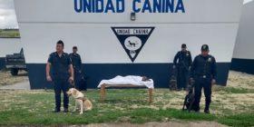 Rinden homenaje a Cashmir, perro policía que falleció tras 10 años de servicio