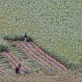 Mantiene el PRI negocio del fertilizante en Guerrero
