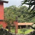 Destrucción de bosque en Veracruz, en manos de un juez
