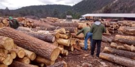 Tala ilegal de madera
