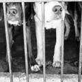 Animales en situación de calle: la vida contra reloj