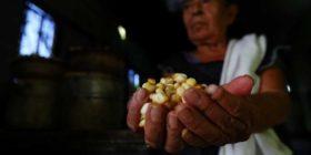 tortillería-mexicali