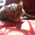 Mi gato. Foto: Luisa Vázquez