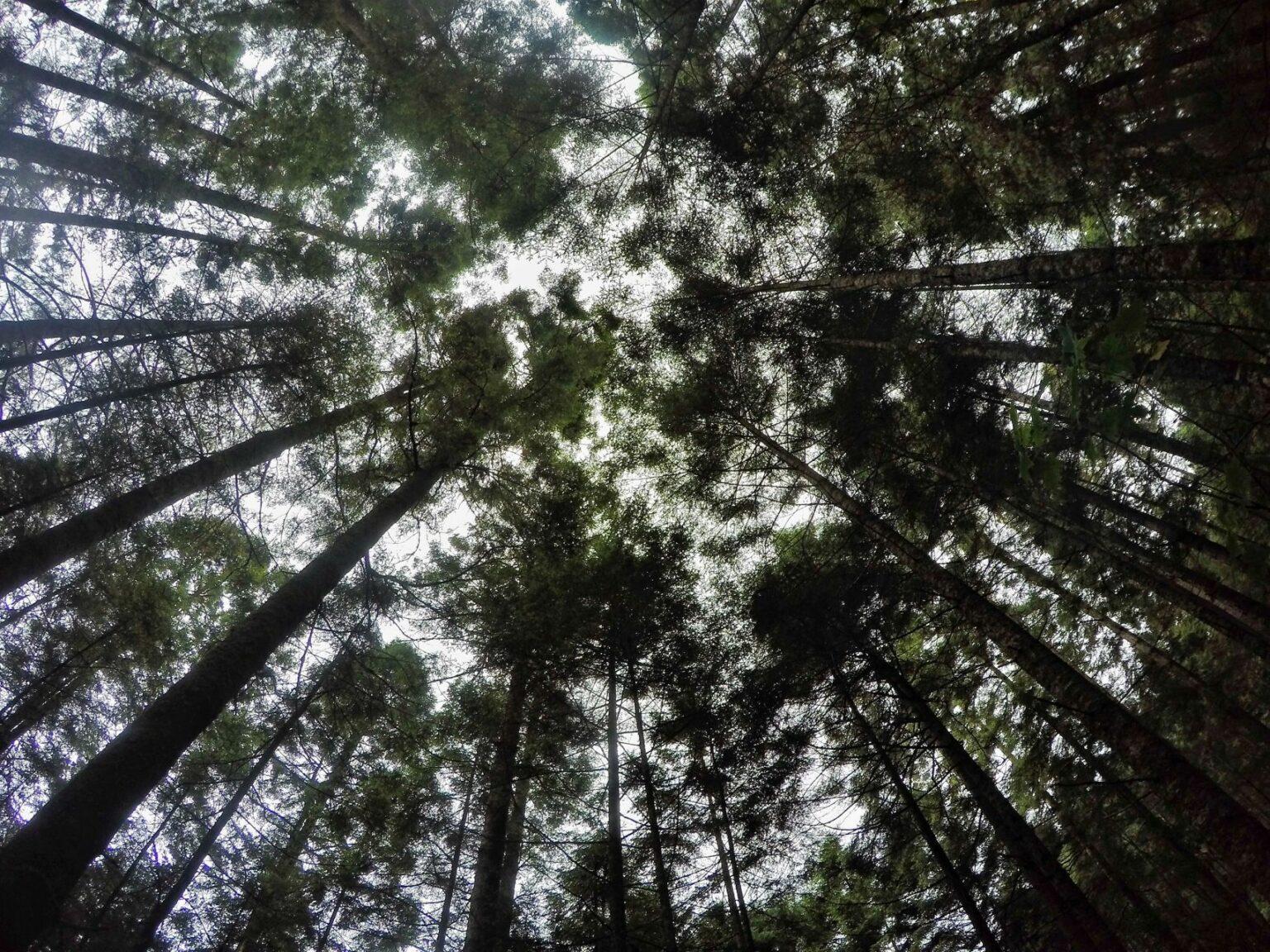 Sin rastro de Homero Gómez, activista forestal desaparecido — Michoacán