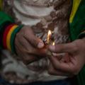 """""""Plantón"""" de cannabis en el Senado para promover los derechos de sus usuarios"""