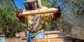 Apicultura, la alternativa ecológica para mejorar ingresos en Chiapas