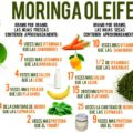 Hojas de Moringa Oleifera. Cortesía. Internet.