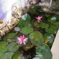 Boutique de plantas acuáticas y exóticas Cortesía: Rossana