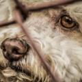 La ciudadanía recalca que los animales en general son acompañantes en la vida del ser humano. Cortesía: ZonaDocs.