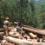 México: comunidades forestales piden un salvavidas al Estado para no ahogarse con la crisis del COVID-19