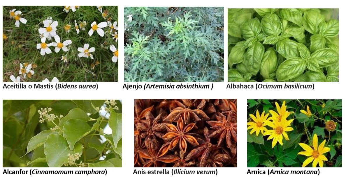 Manual De Prevención Y Tratamiento Para Covid 19 Con Plantas Medicinales De Los Altos De Chiapas Chiapasparalelo