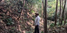 La crisis del café en la tierra de Lucio Cabañas