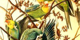 Dibujo naturalista de aves. Ilustración: Pintura y artistas.