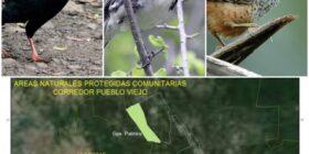 Pueblo Viejo, Comitán y su fantástica diversidad en avifauna