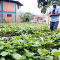 Los espacios muy pequeños limitan a los agricultores, quienes deben decidir si tener plantas o animales. Cortesía: 2000agro.