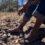 Desplazamiento en la Tarahumara: obligados a dejar su comunidad y su bosque