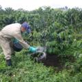Utilizar biofertilizantes también ayudaría en la economía de la región cafetalera. Cortesía: Que Café!